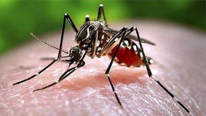 Phun thuốc diệt muỗi tại Hà Nội an toàn và hiệu quả