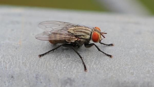 Đừng quên tìm hiểu về phương pháp diệt ruồi của đơn vị ấy