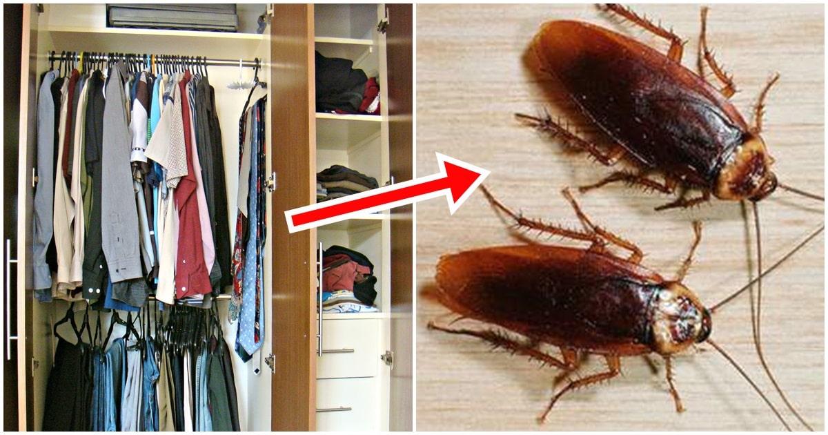 Cách diệt gián trong tủ quần áo