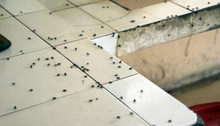 cách diệt ruồi giấm trong nhà vệ sinh