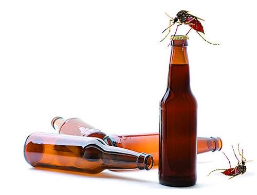 diệt muỗi bằng bia